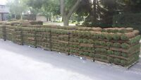 Falcon Landscaping special SOD $ 0.95sqft FLAT RATE!