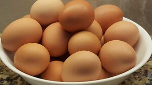 EGGS, Omega 3 Farm Fresh, Free Run Eggs Kitchener / Waterloo Kitchener Area image 1