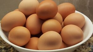EGGS, Omega 3 Farm Fresh, Free Run Eggs