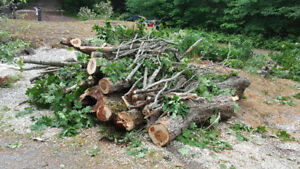 FIREWOOD - MAPLE HARDWOOD FOR SALE