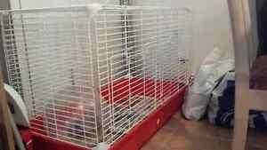 AUBAINE!!! 2 belles petites rates+ cage et accessoires