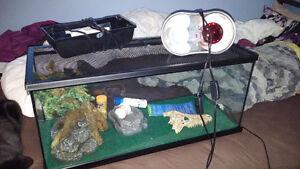 Complete reptile set