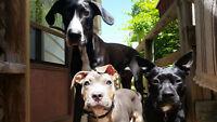 Visite Quotidienne - Daily Pet Sitting Visits