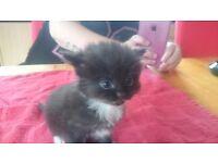 Kittens fluffy