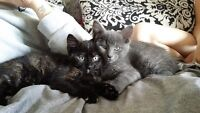 two kittens must go before July 1st
