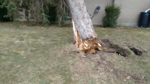 Tree removal. Stump grinding. wood chipping.