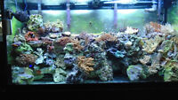 Seventy one Beautiful Corals and rock