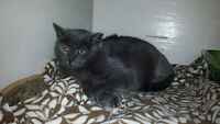 FREE STRAY CAT IN NEED OF LOVING HOME - SPAYED/VACCINATED