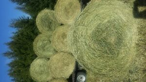 2016 HAY, GREEN, NO RAIN, 550LB, HORSE OR CATLLE