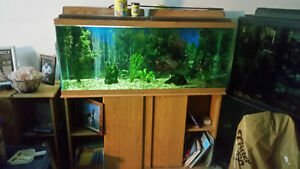 55 gal tank, lights, and stand with fluval filter