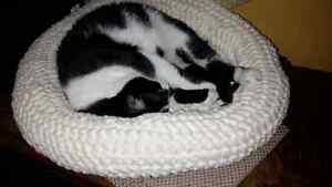 crocheted cozy pet beds/ soft minky fabric beds
