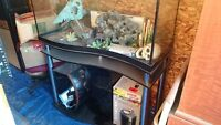 110+ gallon wave front fish tank and stand c/w accessories