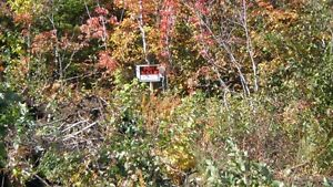 Land For Sale  in Benoit's Cove ,NFLD