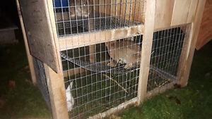 Bunnies & hutches Stratford Kitchener Area image 2