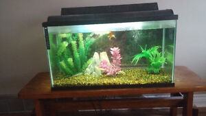 55 gallon fish tank 100 OBO
