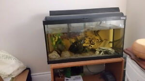 Free fish to a good home and tank and stand for sale!