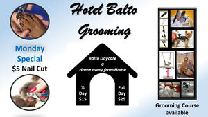 Boarding, Grooming, Daycare! Affordable 5 Star Services!