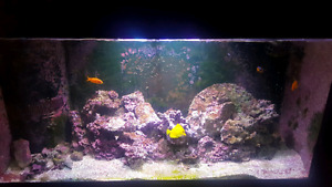 90 gallon fish tank. Well maintained.