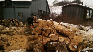 tree removal an cut up logs have lots of experience