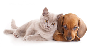 LIVE IN PET SITTING IN YOUR HOME