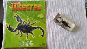 Collection d insectes Saguenay Saguenay-Lac-Saint-Jean image 3