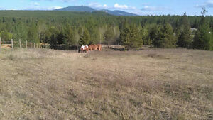 (reduced)  5 acres-Private country setting, minutes from town.