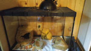 leopard gecko and full setup For sale (negotiable)