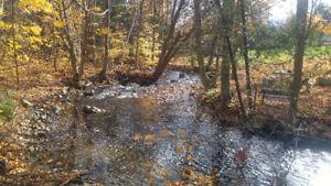 Beau grand terrain boisé bordé par une petite rivière
