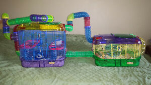 FREE 2 Female gerbils cage accessories