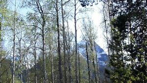 One quarter acre lot for sale in New Hazelton, BC