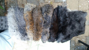 Rabbit skins- for clothing, crafts, traditional attire