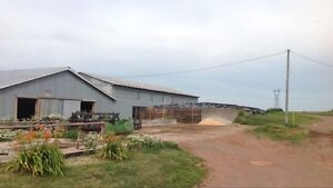 Working beef farm for sale in Nappan, NS Cornwall Ontario image 2