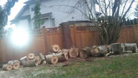 Free Fire Wood Logs 18 inches