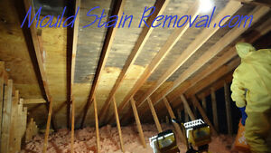 (Mold) Mould Remediation for Attic spaces. Kitchener / Waterloo Kitchener Area image 1