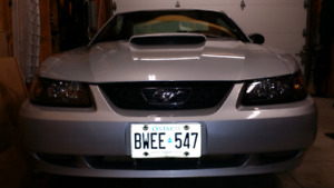 ●SHOW QUALITY ●NO HST● 2002 MUSTANG GT 4.6 V8 - 5 Speed