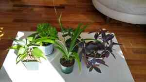 Different types of house plants, Starting $5