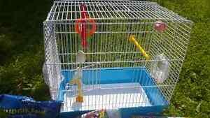 Vage bird