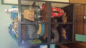 6 ferrets and huge cage with accessories.