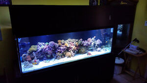 SALTWATER TANK AND FISH A LOT MORE