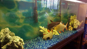 !NEGOTIABLE! 105 Gallon Hagen Fish tank including all accessorie