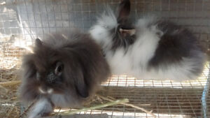 Cute and Fluffy Rabbits
