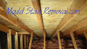 (Mold) Mould Remediation for Attic spaces. Kitchener / Waterloo Kitchener Area image 3