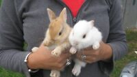 Baby bunnies - free to good home!