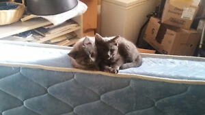 Two young cats up for adoption