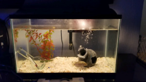 Beautiful aquarium for sale
