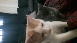 Brother and sister kittens