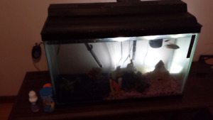 Fish tank complete Set up & Fish