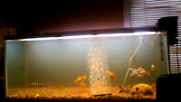 awesome fish tank with 15 gold fish
