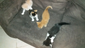 Give away kittens