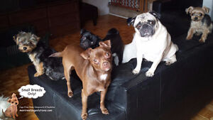 HAPPY LITTLE DOGS HOME DAYCARE SINCE 2010 West Island Greater Montréal image 1